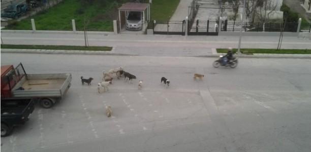 Τρίκαλα: Εφιάλτης με αδέσποτα σκυλιά για μικρούς μαθητές