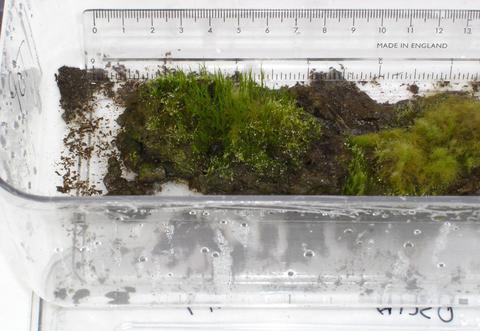 «Αναστήθηκαν» μετά από 1.500 χρόνια φυτά στην Ανταρκτική