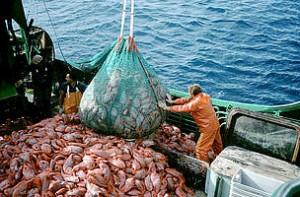 "Greenpeace: υπεραλίευση 82% στη Μεσόγειο εξαφανίζει τα ψάρια – ""Μειώστε τους αλιευτικούς στόλους"""