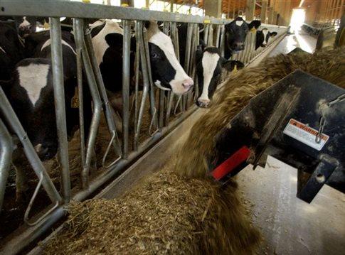 Πρόταση για τρεις κατηγορίες γάλακτος από τους αγελαδοτρόφους