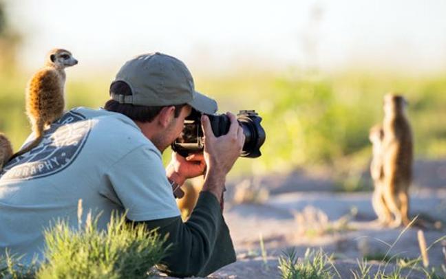 Σουρικάτες… φωτογράφοι!
