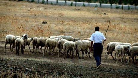 Ελασσόνα: Κτηνοτρόφος απασχολούσε παράνομα βοσκό