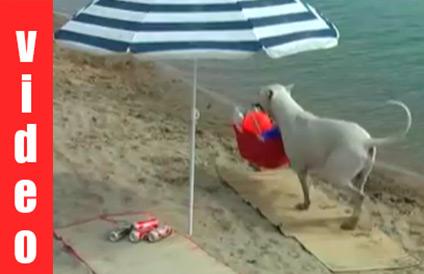 Όταν τα σκυλιά οργανώνουν το τέλειο... beach party