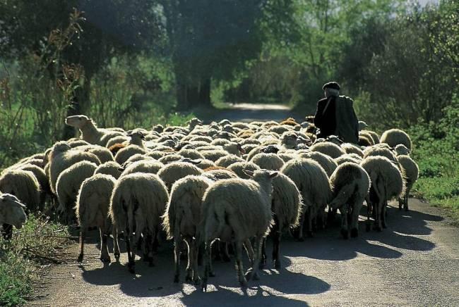 Λαρισαίος κτηνοτρόφος απασχολούσε παράνομα αλλοδαπό εργαζόμενο