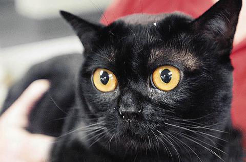 Γάτα επέστρεψε στους ιδιοκτήτες της 3 χρόνια μετά το τσουνάμι
