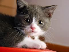 Εδεσε αδέσποτο γάτο με σύρμα και τον βασάνιζε