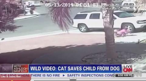 Η «ηρωίδα» γάτα της Καλιφόρνια έριξε εναρκτήρια βολή σε αγώνα μπέιζμπολ