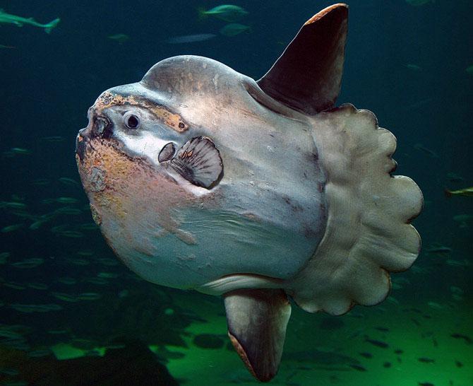 Γρηγόρης Καρταπάνης: Αλιευτικά παράξενα στον Παγασητικό