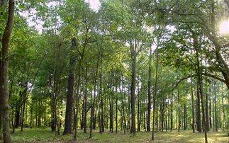 Πολιτικές που «καίνε» τα δάση καταγγέλλει η WWF