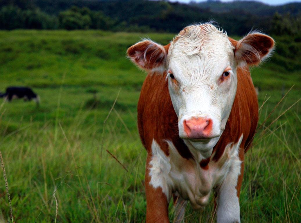 Καταγγελίες κατά Λαρισαίων κτηνοτρόφων