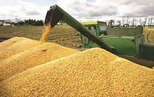 Δεν θα παραλάβει φέτος σιτηρά ο Αγροτικός Συνεταιρισμός Βόλου