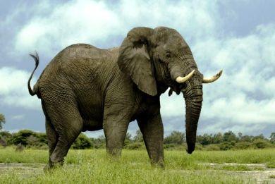 Η πόλη που καταδίκασε σε απαγχονισμό έναν ελέφαντα