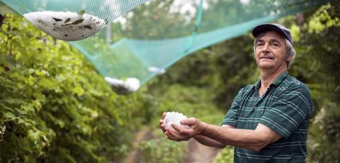 Πρόγραμμα 5 εκατ.€ για προστασία καλλιεργειών από χαλάζι και παγετό