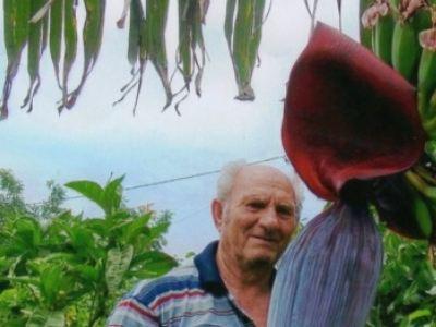 Λάρισα: Συνταξιούχος έφτιαξε μπανανοφυτεία