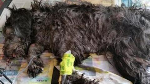Κύπρος: Σε διαθεσιμότητα υπάλληλοι ξενοδοχείου για κακοποίηση σκυλιού