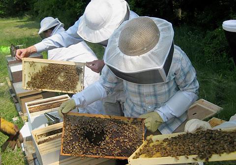 Ολοκληρώθηκε η εντατική εκπαίδευση των μελισσοκόμων