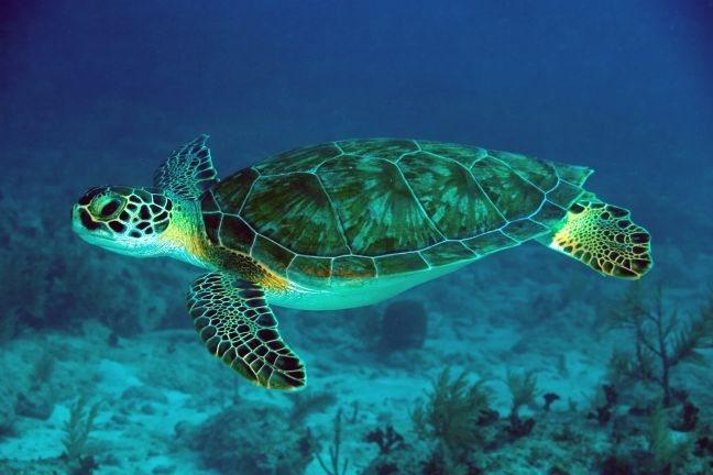 Τραυματισμένη θαλάσσια χελώνα βρέθηκε στη Σκιάθο