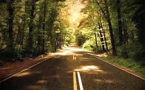 Φυτεύουν 2 δισ. δέντρα στις εθνικές οδούς για να καταπολεμήσουν ρύπανση και ανεργία