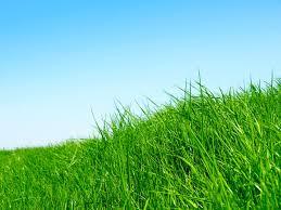 Απόλυτη ξηρασία στην Καλιφόρνια -Συνεργεία βάφουν το γρασίδι πράσινο [βίντεο]