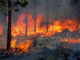 Πυρκαγιά στην Καστάνη Σκοπέλου