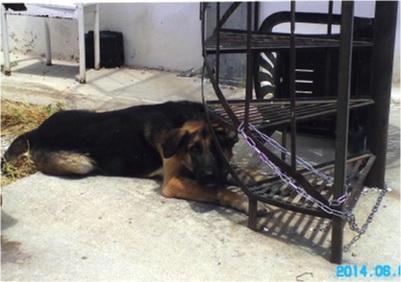 Σκηνικό Νταχάου στο καταφύγιο αδέσποτων σκύλων του δήμου Αθηναίων