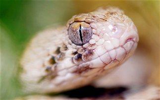 Φίδι δύο μέτρων αναστάτωσε τα Τρίκαλα