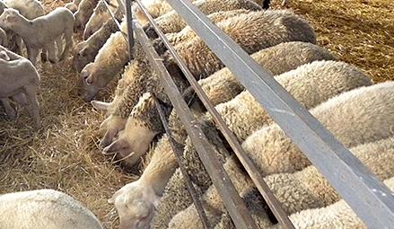 Ξεσηκώνονται οι κτηνοτρόφοι ~ ΓΙΑ ΤΗΝ ΕΞΙΣΩΤΙΚΗ ΑΠΟΖΗΜΙΩΣΗ