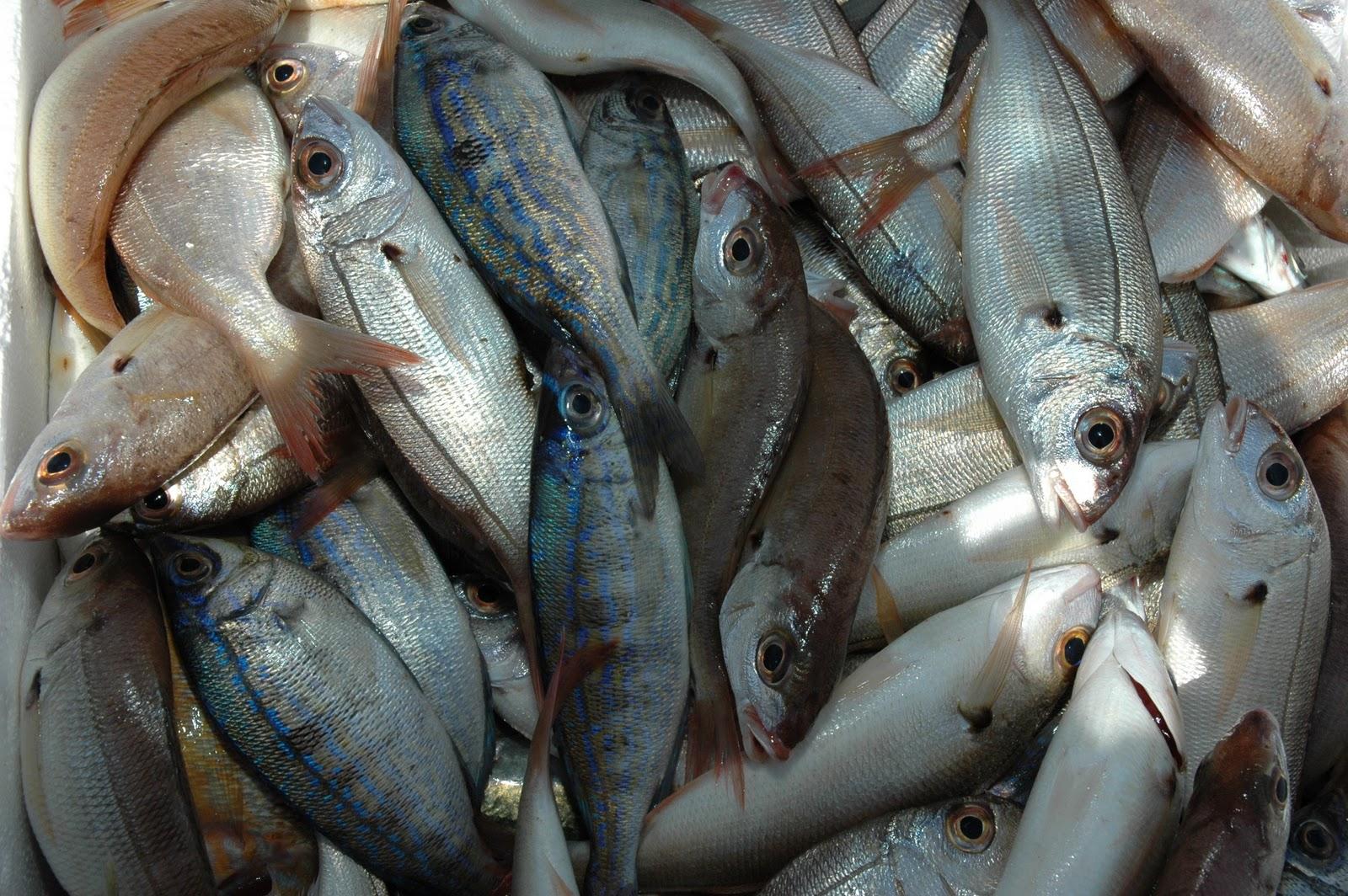 Πωλούσε ψάρια χωρίς άδεια