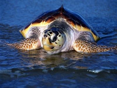 Χελώνα κατάπιε αγκίστρι