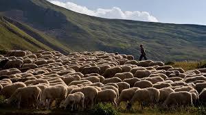 Σε απόγνωση οι κτηνοτρόφοι ~ ΠΡΟΒΛΗΜΑΤΙΣΜΟΣ ΣΤΟ ΠΑΝΕΛΛΗΝΙΟ ΣΥΝΕΔΡΙΟ