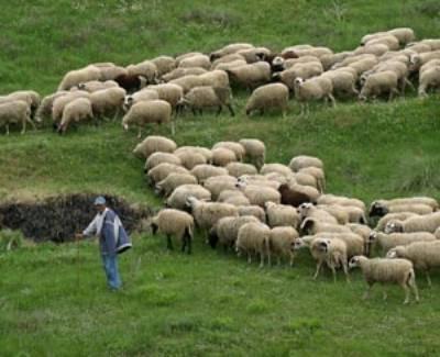 Προθεσμία για την εξισωτική αποζημίωση των κτηνοτρόφων
