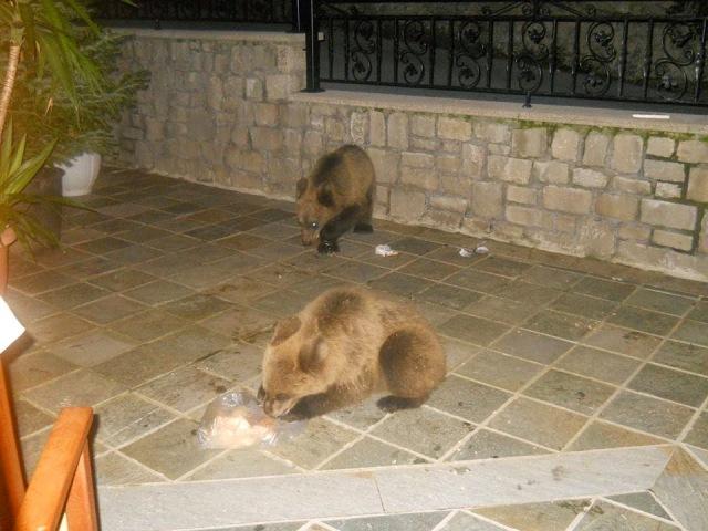 Αρκουδάκια κόβουν βόλτες στο Μέτσοβο