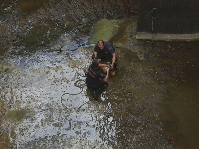 Καρέ καρέ η επιχείρηση της πυροσβεστικής για την διάσωση ζαρκαδιού από κανάλι στο φράγμα του Μόρνου