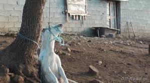 Αναβλήθηκε η δίκη για τoν απαγχονισμό σκύλου στη Βλαχάβα Καλαμπάκας