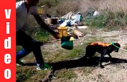 Σοκ: Δύο νεαροί καίνε ζωντανό ένα σκυλάκι-Τους ψάχνει η Interpol