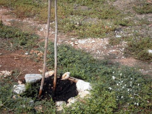 Ασυνείδητοι στον Αλμυρό έριξαν πετρέλαιο σε δέντρο