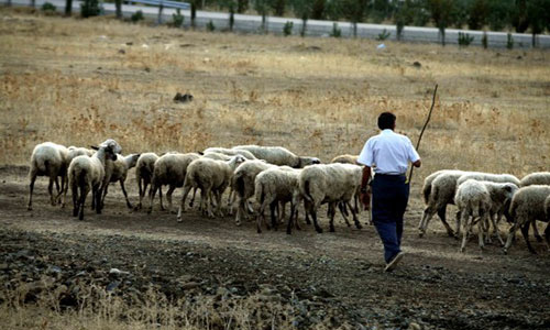 Αποτέλεσμα εικόνας για Σε απόγνωση οι κτηνοτρόφοι του Έβρου
