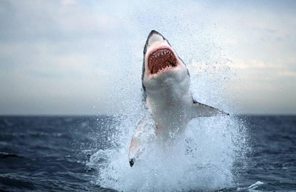 Μια δασκάλα, φωτογραφίζει με απόλυτη ψυχραιμία την επίθεση ενός μεγάλου λευκού καρχαρία [εικόνα]