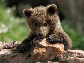 Κακοποιημένο αρκουδάκι βρέθηκε νεκρό στο Σέντραλ Παρκ της Νέας Υόρκης