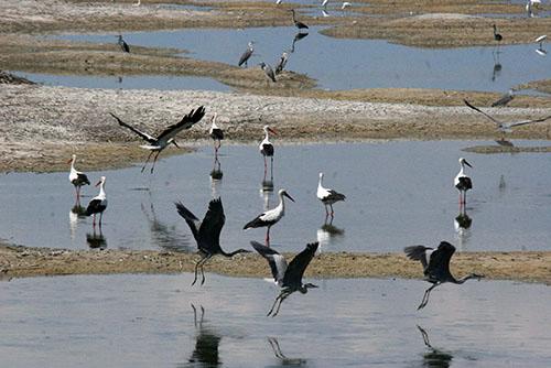 Η Πανευρωπαϊκή γιορτή των πουλιών γιορτάστηκε και φέτος από τον Φορέα της Κάρλας