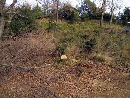 Η παράνομη υλοτόμηση «αφανίζει» το δάσος