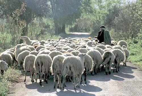 Πετσοκομμένες οι επιδοτήσεις για την επιλέξιμη κτηνοτροφία