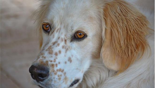 Εντολή του Αρείου Πάγου για αυστηρή τήρηση της νομοθεσίας κατά των βασανιστών ζώων