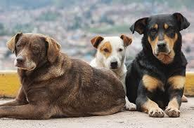 Καρδιτσιώτης έβαλε σε ...τσουβάλια δυο σκυλιά