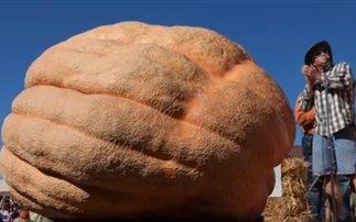 Κολοκύθα βάρους ενός τόνου καλλιεργήθηκε στις ΗΠΑ