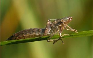 Τα έντομα πρωτοεμφανίστηκαν πριν από 480 εκατ. χρόνια