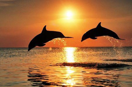 H MOm παρακολουθεί τα δελφίνια των Σποράδων