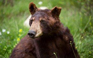 «Έφυγε» ο Γιώργος, η αμερικάνικη αρκούδα του «Αρκτούρου»