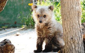 Βρέθηκε αιμόφυρτο αρκουδάκι στο Μέτσοβο