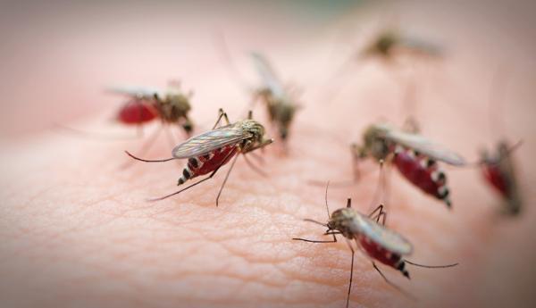 Στο μισό μειώθηκαν οι θάνατοι από ελονοσία